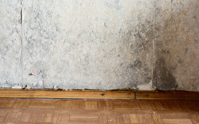 Warning Signs That You Have A Leaky Basement or Crawlspace Under Your Home