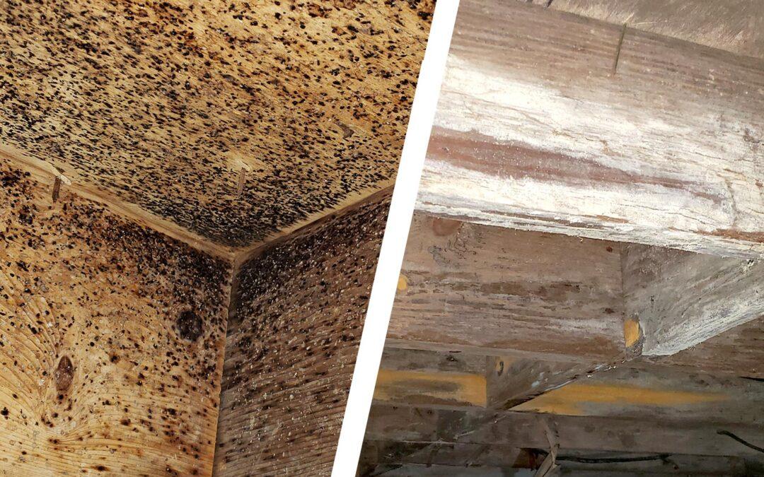 Mold vs Bug Poop – The Definitive Guide